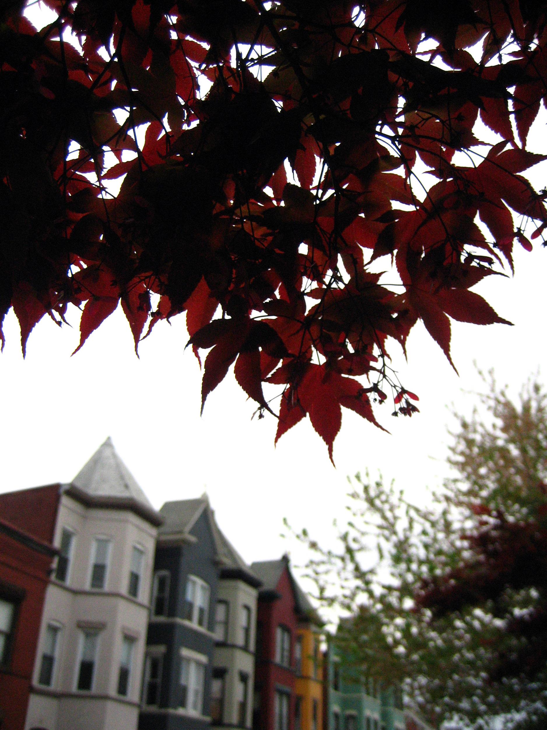 Bloomingdale Neighborhood, Washington D.C., April 2006